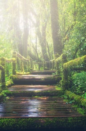 Balade hypnotique en forêt