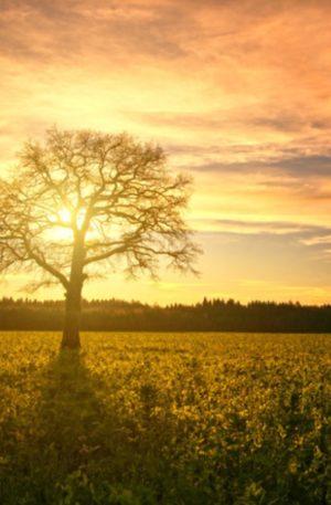 Renforcer son Ancrage et son discernement- Hypnose & Chant Vibratoire