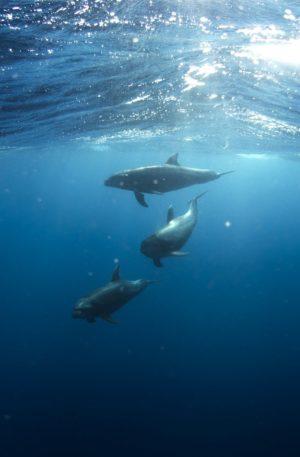 S'ouvrir au nouveau avec l'énergie des dauphins – Hypnose & Chant Vibratoire