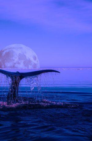 S'ouvrir à sa transformation intérieure avec l'énergie des baleines – Hypnose & Chant Vibratoire