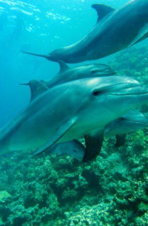 Elever sa vibration avec l'énergie des dauphins